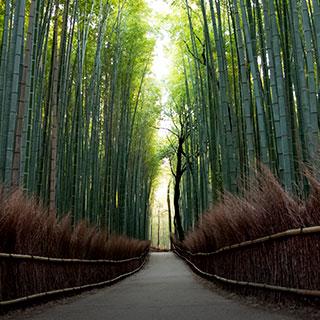 대나무 숲 길